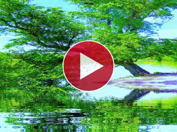 GIF: Árbol junto al río