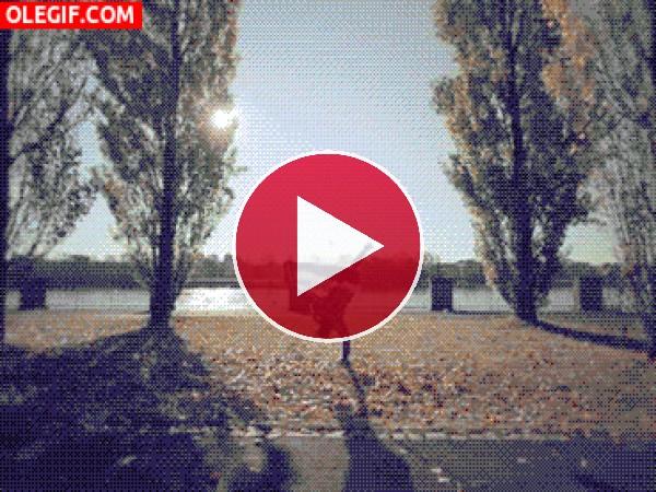 GIF: Bailando breakdance sobre las hojas otoñales