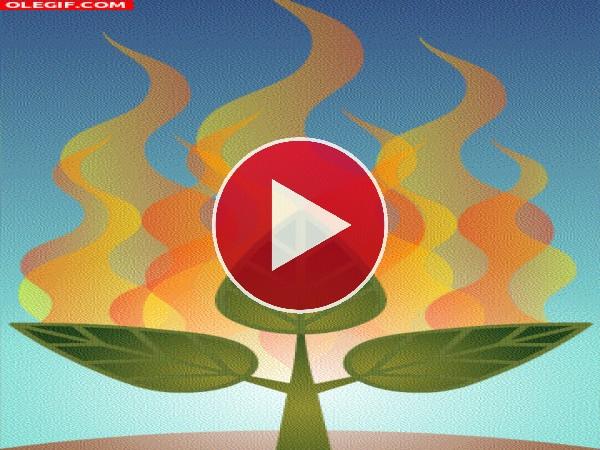 GIF: Cuida la naturaleza, no la quemes