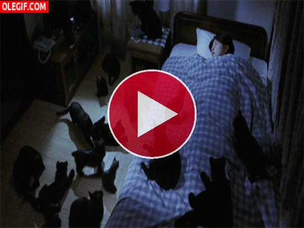 GIF: Durmiendo entre gatos