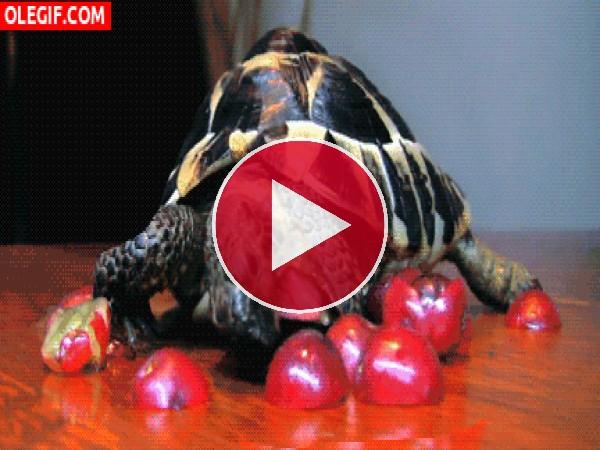 GIF: Esta tortuga no puede comer las guindas