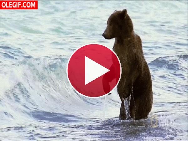A este oso le gusta bañarse en el mar