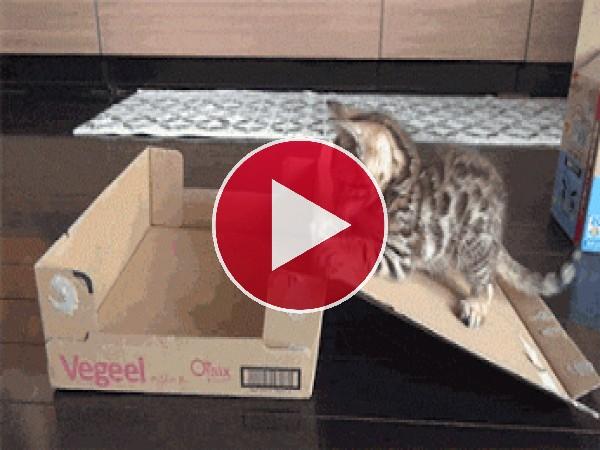 GIF: Este gatito se quedó encerrado