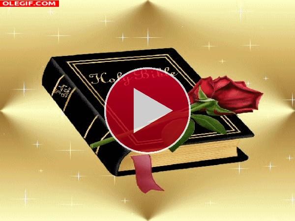 Rosa sobre una Biblia