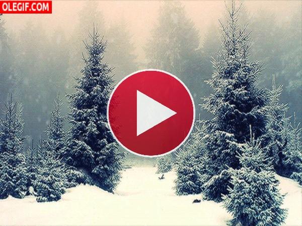 GIF: Nieve cayendo en el bosque