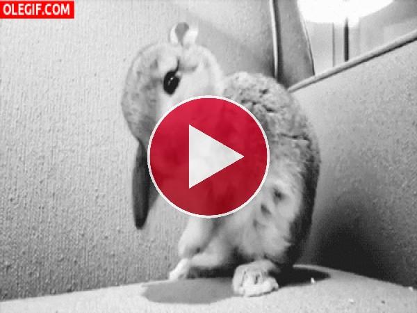 GIF: Un simpático conejo