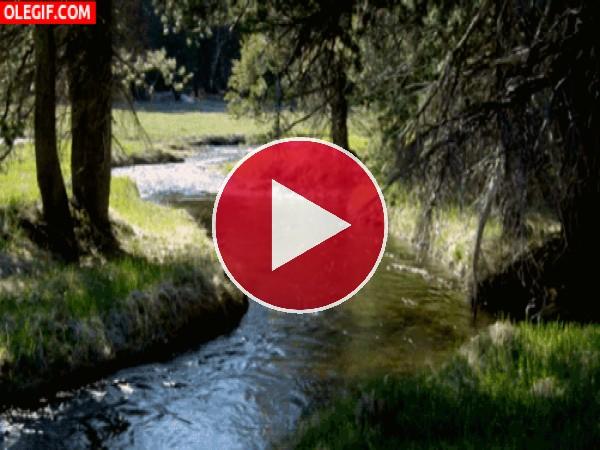 Río fluyendo en el bosque