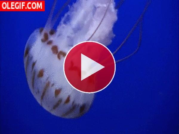 La vida de una medusa