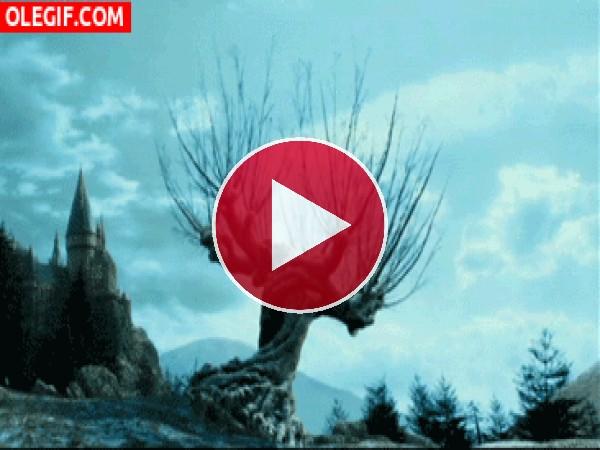 GIF: Árbol sacudiéndose el agua