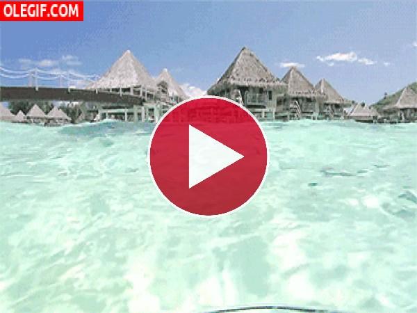 GIF: Peces nadando bajo el mar transparente