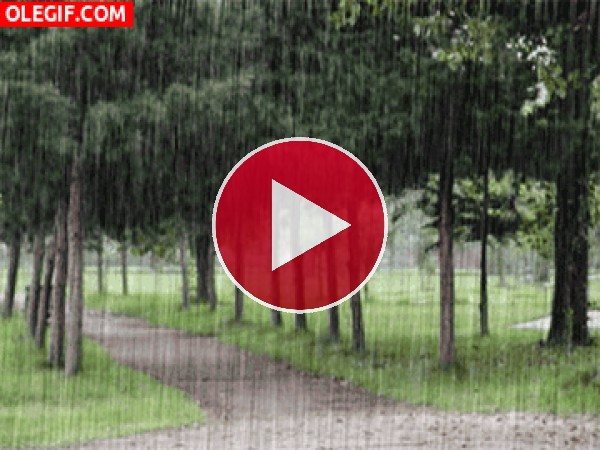 GIF: Lluvia en el campo