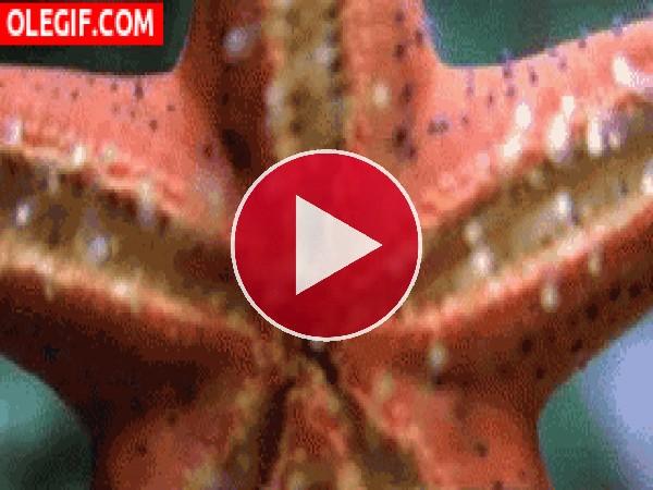 Una estrella de mar en movimiento