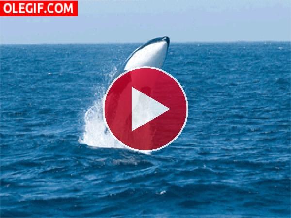 Orca saltando en el océano
