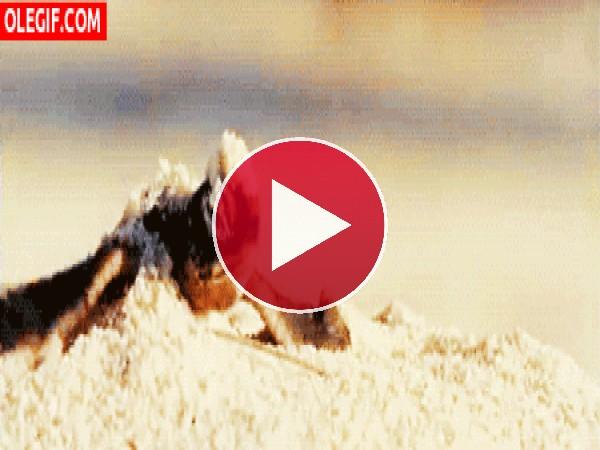 Mira a esta tortuga bebé saliendo de la tierra