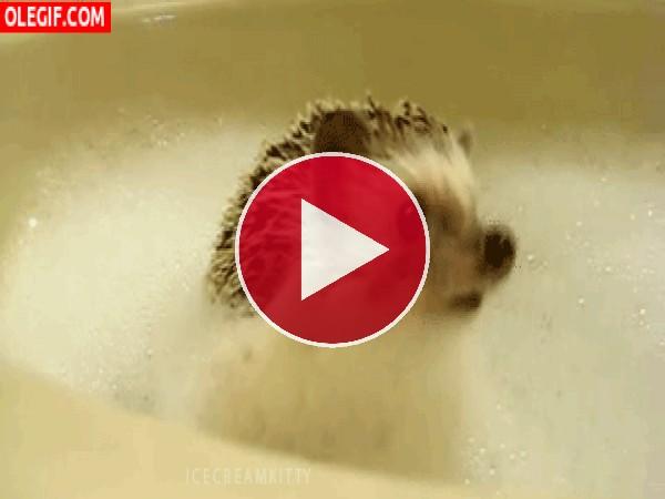 GIF: A este erizo le gustan los baños de espuma