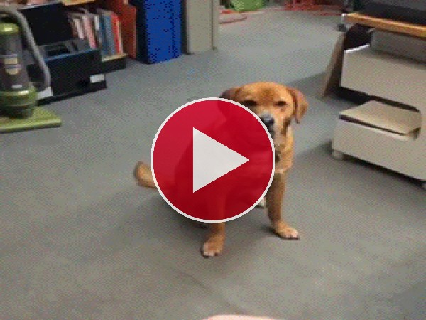 GIF: A este perro no le apetece jugar