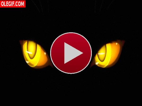 Ojos de gato luciendo en la oscuridad