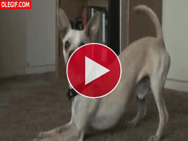 Un perro muy obediente