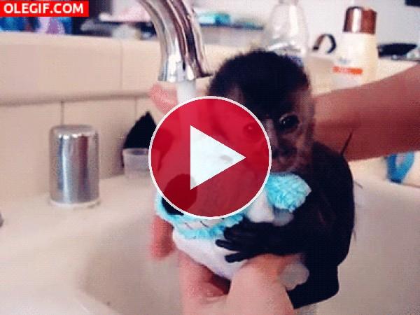 Mira cómo bañan al bebé mono