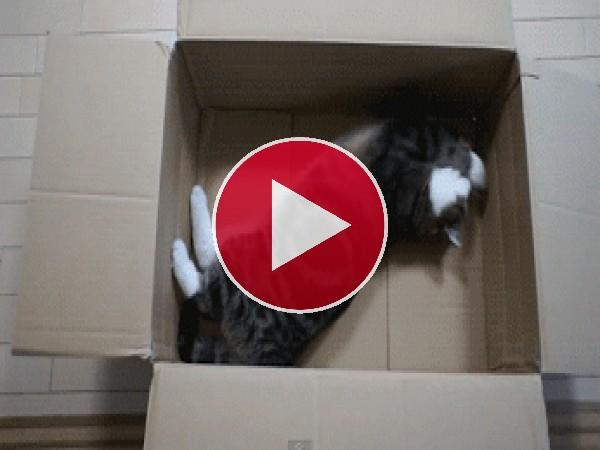 Haciendo estiramientos en una caja