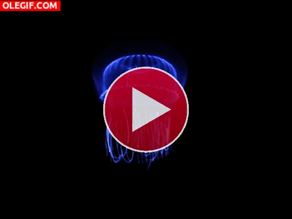 GIF: El movimiento de la medusa