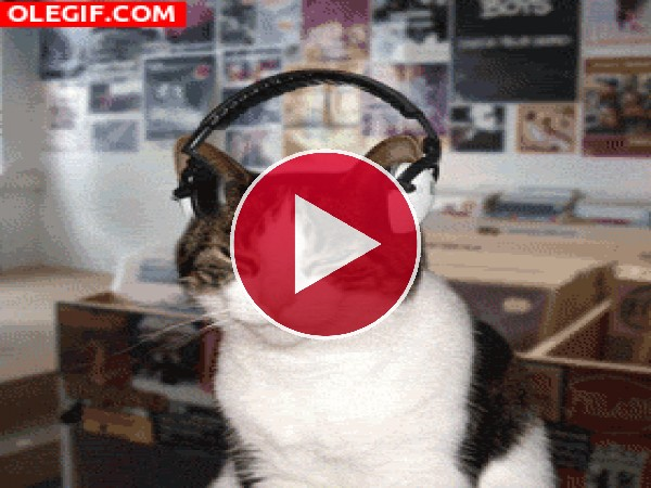 GIF: ¡Me gusta la música!