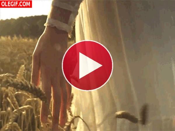 Tocando las espigas de trigo