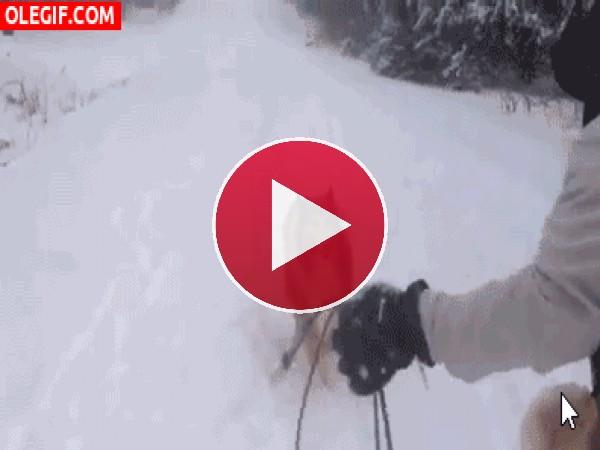 A este perro no le gusta que le tiren nieve a la cara