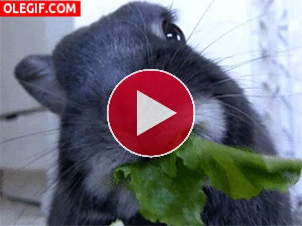 GIF: A este conejo le gustan las hojas verdes