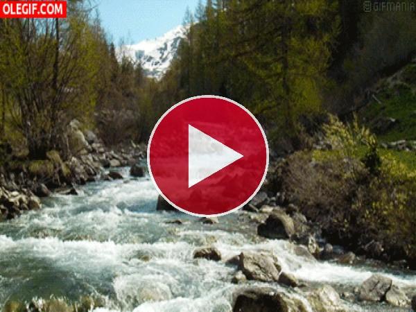 Río fluyendo entre las piedras