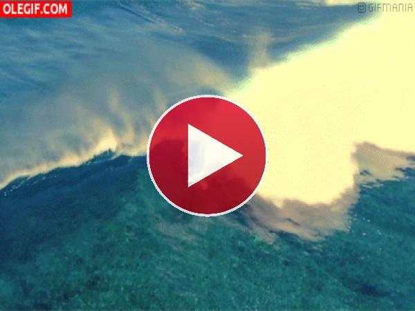 Surfista bajo una ola