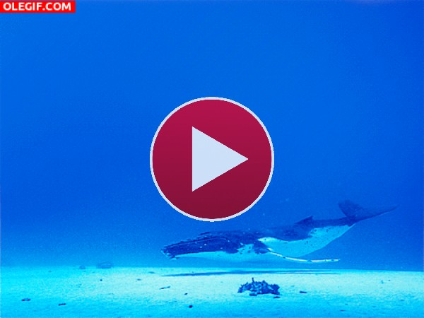 Ballena nadando en el fondo marino