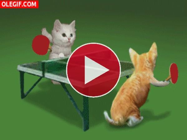GIF: ¡Juguemos al ping-pong!