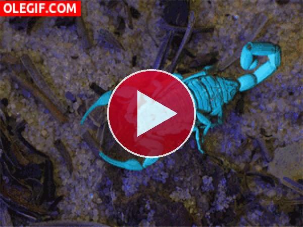 GIF: Observando al escorpión