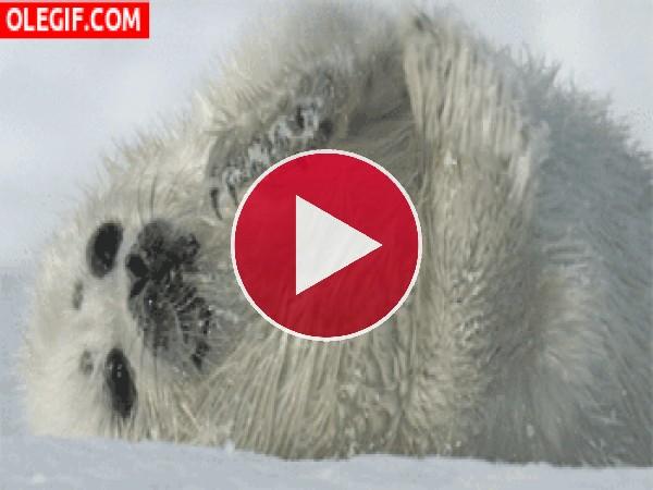 Mira a esta pequeña foca