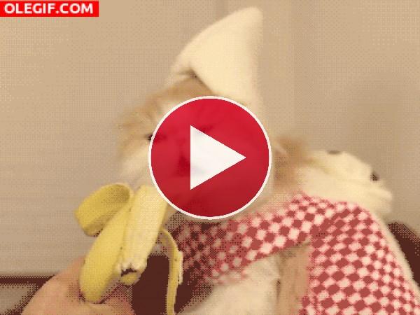 Este plátano esta bien rico