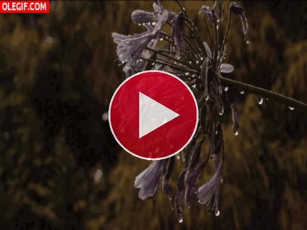 Flor bajo la lluvia