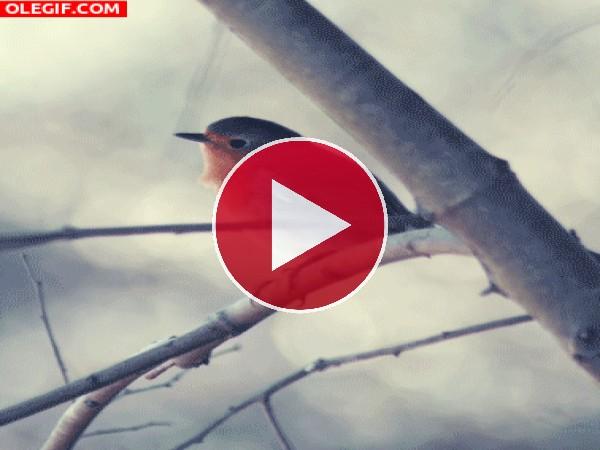 Un petirrojo en la rama