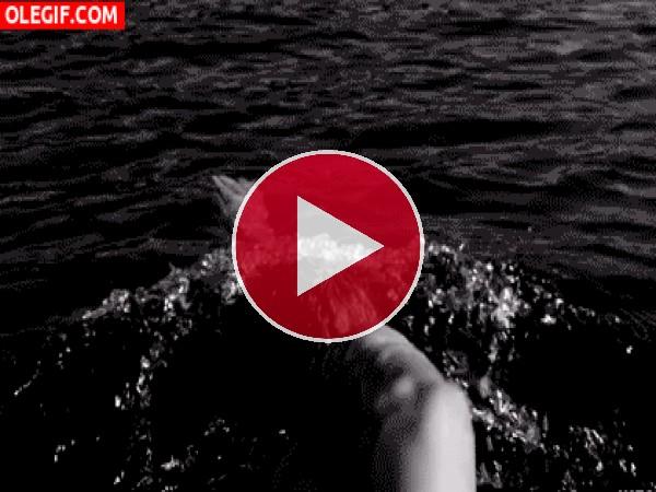 GIF: Hombre nadando