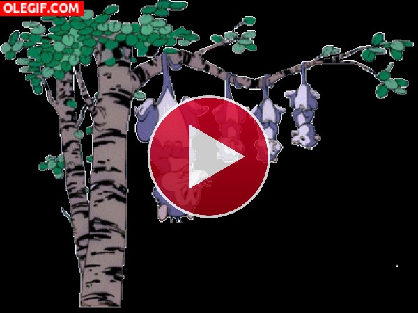 GIF: Zarigüeyas colgadas del árbol