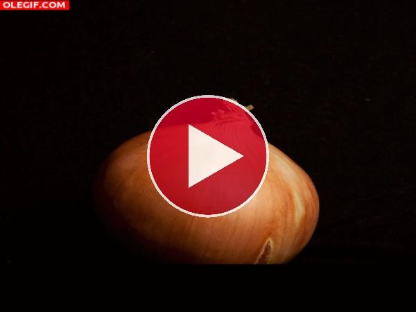 GIF: Las capas de una cebolla