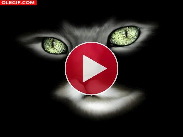 Los ojos brillantes del gato
