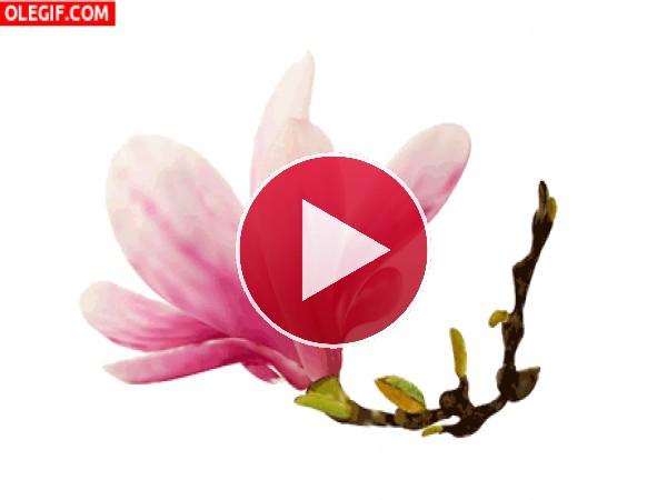GIF: Magnolia en movimiento