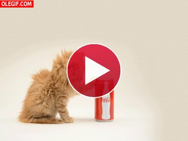 Este gato quiere Coca-Cola