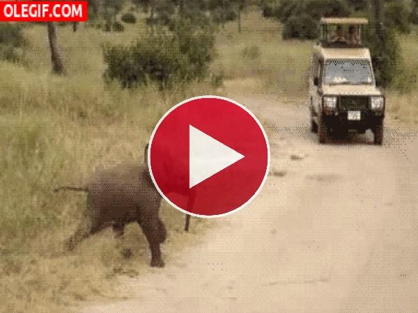 Pequeño elefante cruzando la carretera