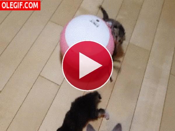 GIF: Rescatando al gatito