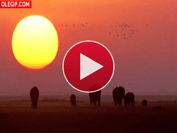 Elefantes caminando al amanecer