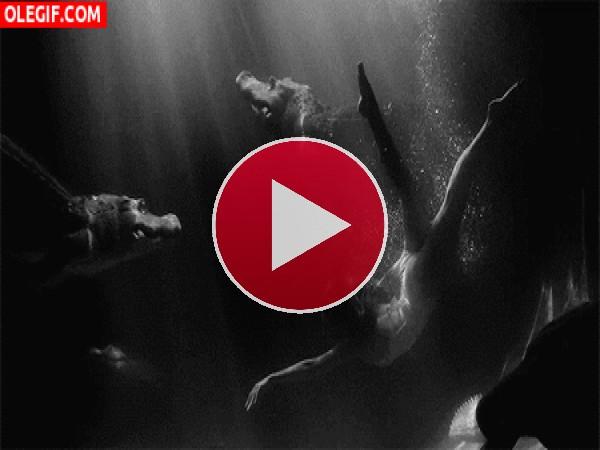 GIF: Nadando entre cocodrilos