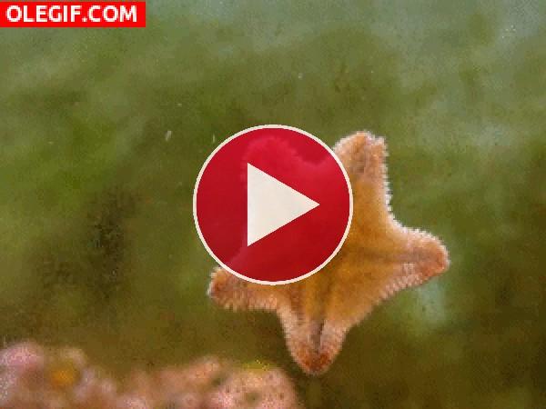 Estrella de mar moviéndose por el cristal