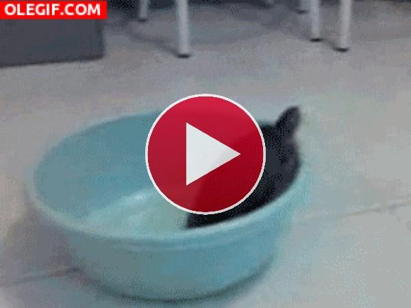 Esta tortuga es una escapista